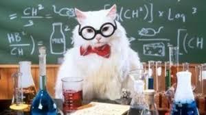 science-cat