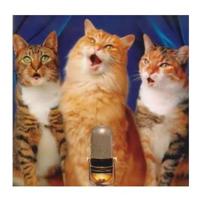 singing-cats-sq400
