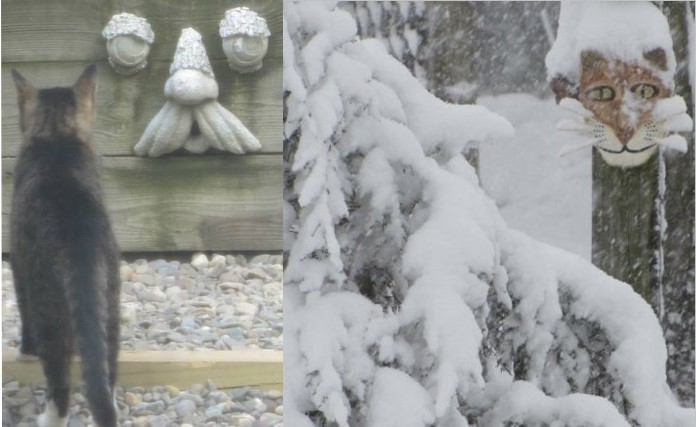 A photo of a feral cat looking at a face sculpture on the left, and a photo of a cement cat face in a snowstorm on the right.