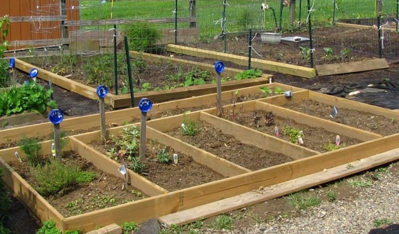 A photo of raised beds for seasonal vegetables in the background and herbs in the foreground.